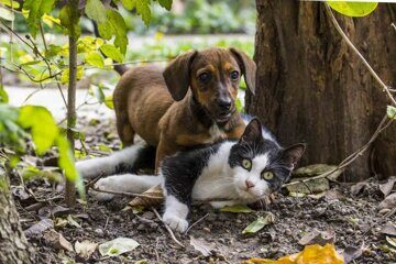 1536835522_stray-animals-1